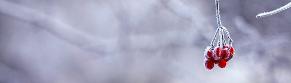 Iivisniemi-Kaitaa Seura